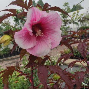 Rośliny na mokre i podmokłe tereny